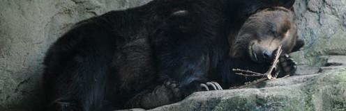 entry_bear