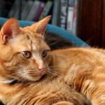 猫好きにはたまらないアイテムを発見